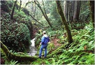 Magazine_CaliforniaCoast&Ocean_Spring-Summer2005_Colby Forrester photo.jpg