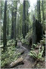 Newspaper_TheWillitsNews_20080123 forest photo.jpg